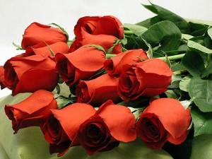 Любимый цветок Роза