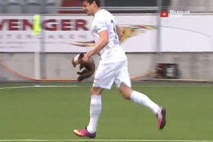 Куница укусила футболиста во время матча