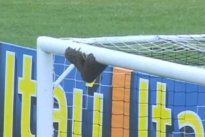 Матч команды Ривалдо прервали из-за нашествия пчел