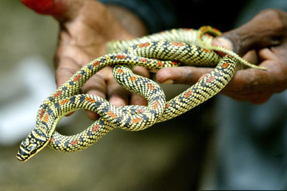 В Индии ядовитые змеи выползли на футбольное поле
