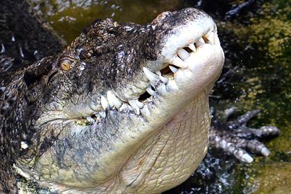 Крокодил убил гольфиста в ЮАР