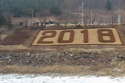В Южной Корее вырубили заповедный лес ради Олимпийских игр