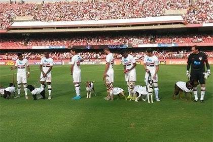 Пес на поводке у футболиста «Сан-Паулу» справил нужду на поле под гимн Бразилии