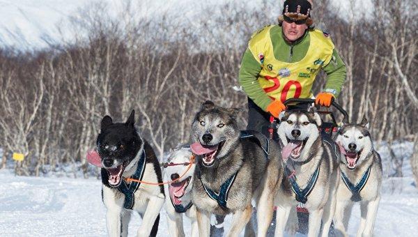 Старт гонки на собачьих упряжках на Камчатке перенесен из-за погоды