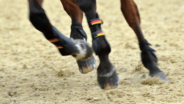 Сборную России по конному спорту допустили до участия в ОИ-2016