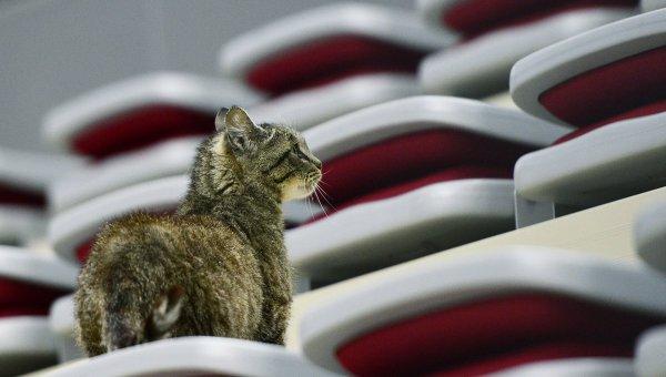 Во Владивостоке перед матчем ХК «Адмирал» откроют памятник кошке Матроске